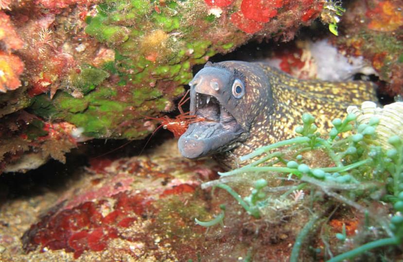 La Covid-19 ha augmentat de manera significativa els peixos i mariscs a la reserva de les Illes Medes – Juny 2020