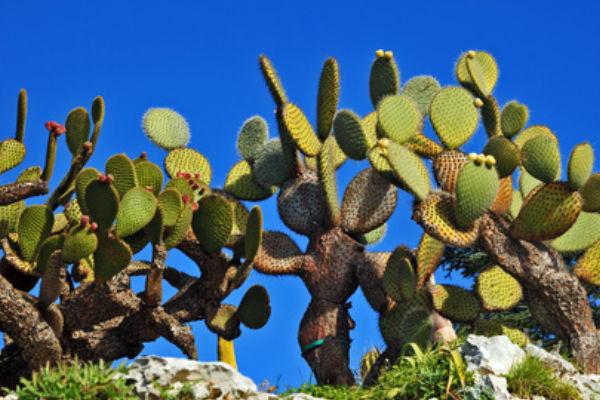 Jardí botànic de Calella de Palafrugell
