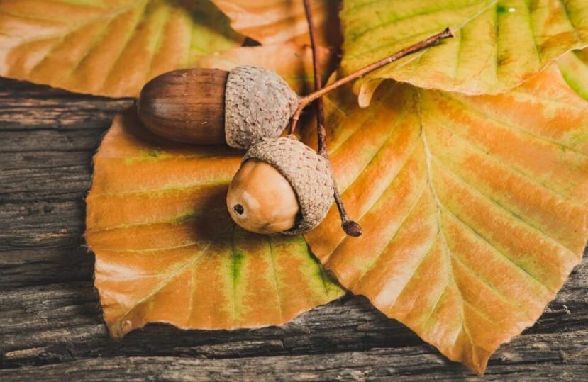 Activitats per gaudir de la tardor a la Costa Brava – Novembre 2020